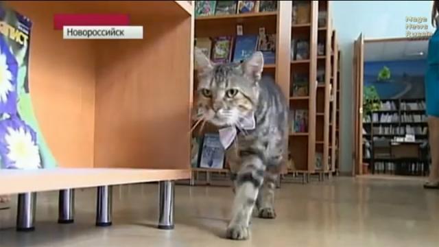 流浪猫 俄罗斯 悲惨/谁说流浪猫的遭遇一定是悲惨?